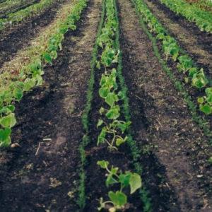 regenerativer Gemüsebau WirGarten Open Social Franchise Netzwerk