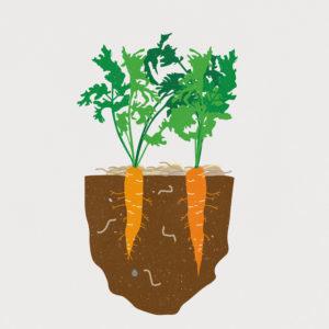 Beratung Gemüsebau und Bodenfruchtbarkeit WirGarten Open Social Franchise Netzwerk